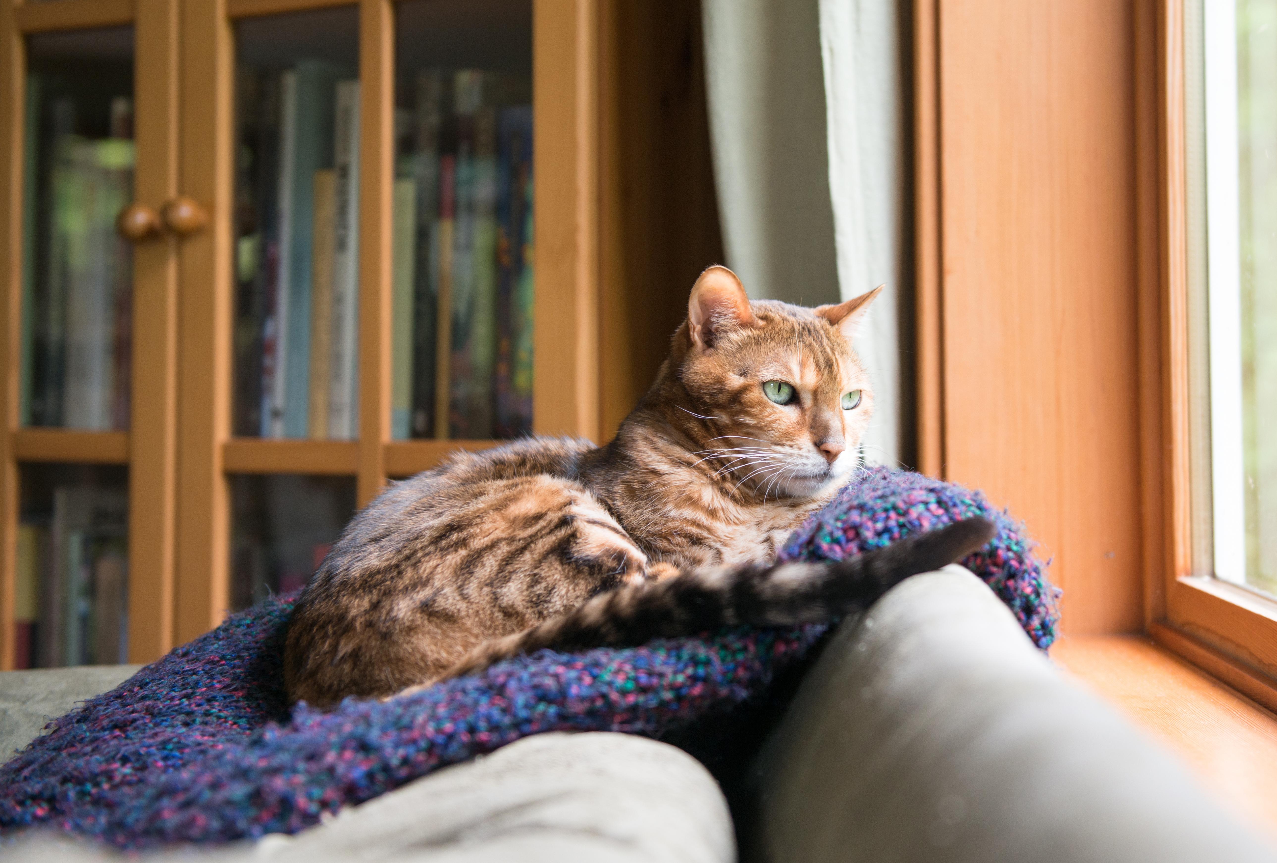 brochure cat