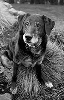 senior-dog-on-grass-bush.jpg