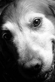 senior-dog-close-up.jpg