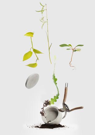 Plantswap.jpg