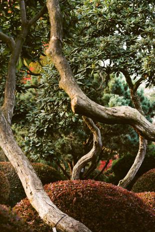 71_Rhododendron.jpg