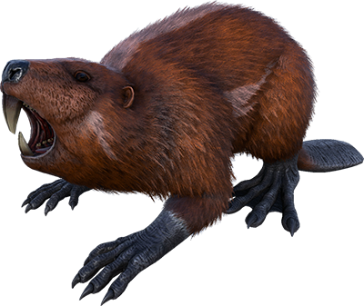 Random Beaver (Pc PvE)