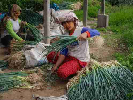WOMEN IN AGRICULTURE: AN IMPERCEPTIBLE WORKFORCE