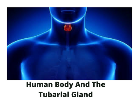 HUMAN BODY AND THE TUBARIAL GLAND