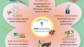 SPRING PET SAFETY in SUNLAND-TUJUNGA AND THE FOOTHILLS AREA