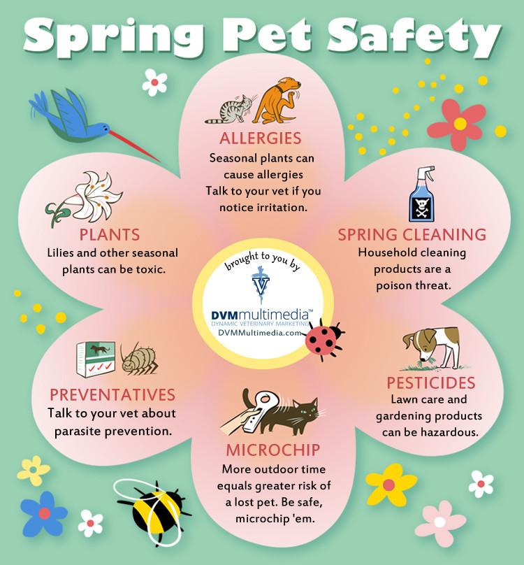 Spring Pet Safety   Purrs & Grrrs Dog Walking & Pet Sitting   Sunland - Tujunga