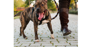 Dog Walking Tips for Pet Parents in the Crescenta Valley