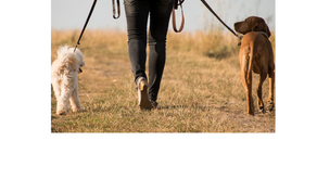 5 Incredible Benefits of Walking Your Dog