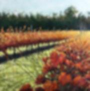 autumn vineyard.jpg