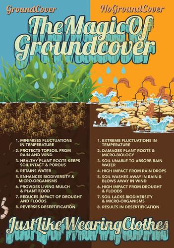 groundcovera3.jpg