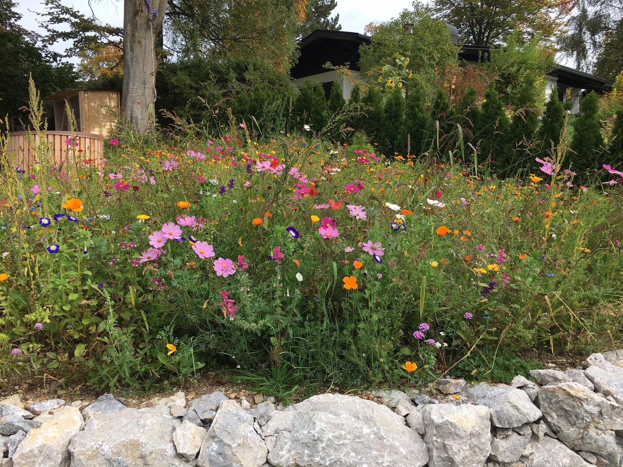 Blütenpracht und Bienenweide