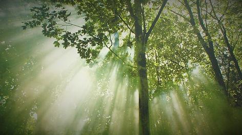 forest-612519_1920.jpg