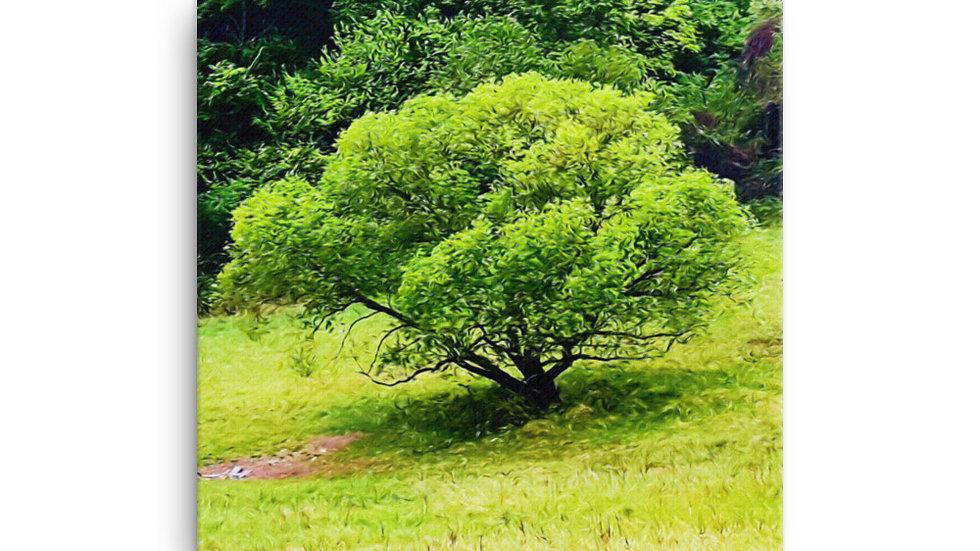 Letná Vŕba, Summer willow