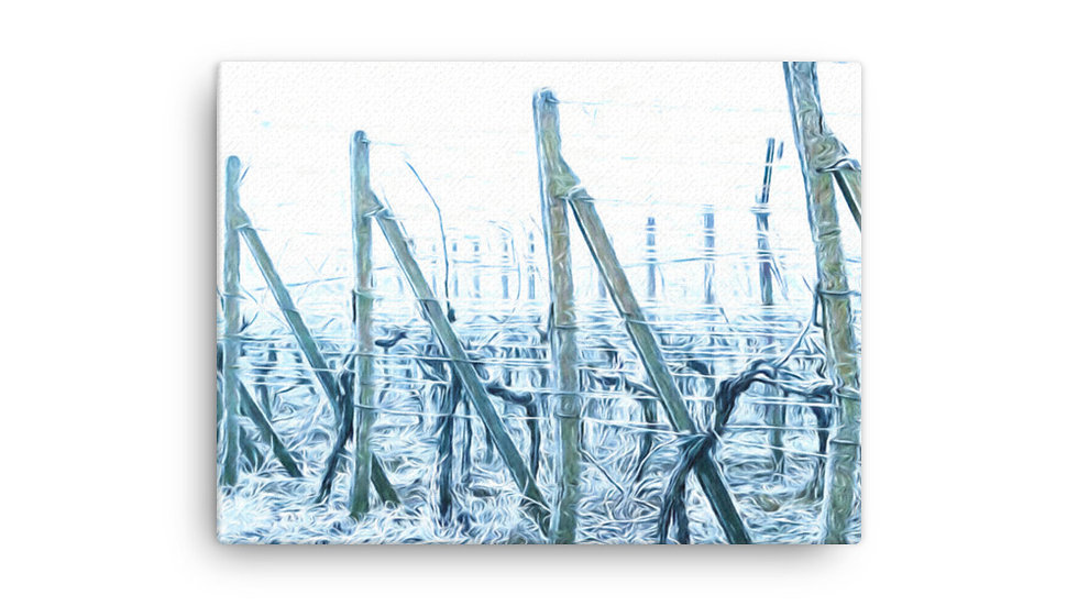 Biely vinohrad 4