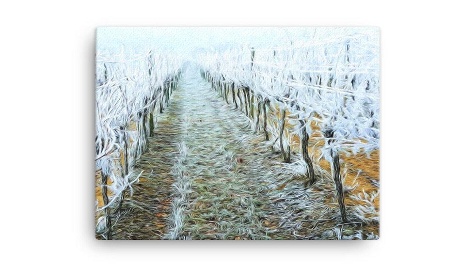 Biely vinohrad 5