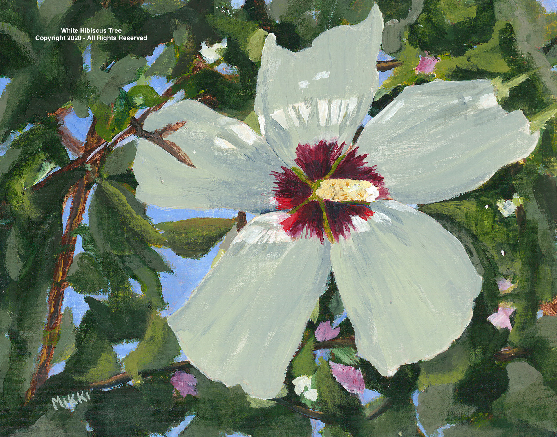 White-Hibiscus-Tree.jpg
