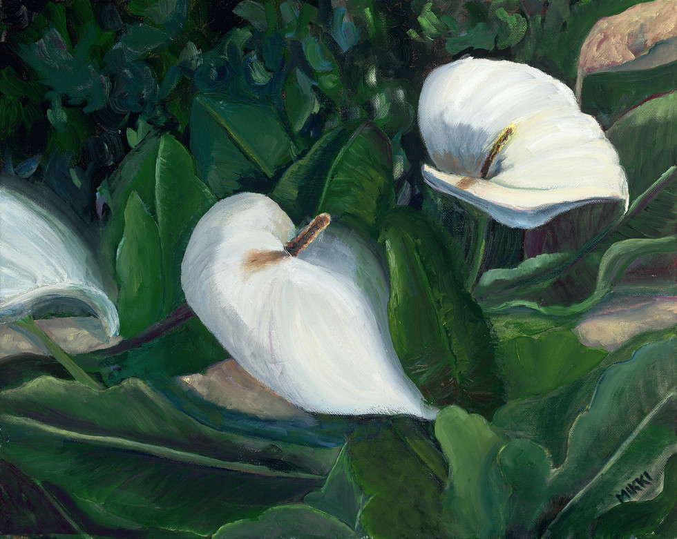 "Fort Ross Calla Lilies, oil (16"" x 20"")"