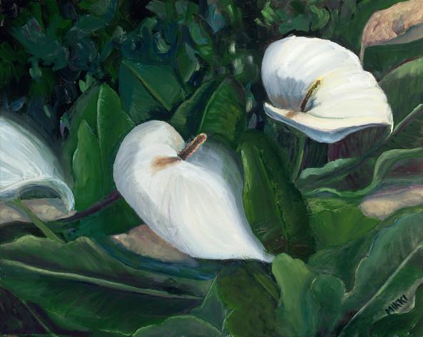 "Fort Ross Calla Lilies, oil (16"" x 20"")"