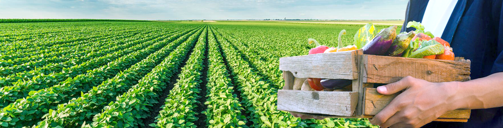 Produce Page image.png