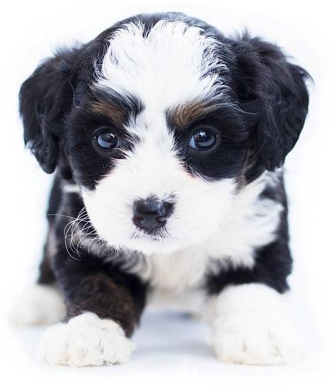 pexels-poodles-doodles-1458916%20(1)_edi