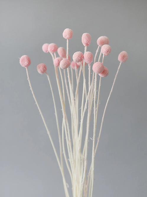 Pink billy balls
