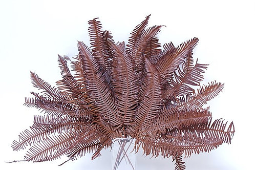 Brown preserved mountain fern