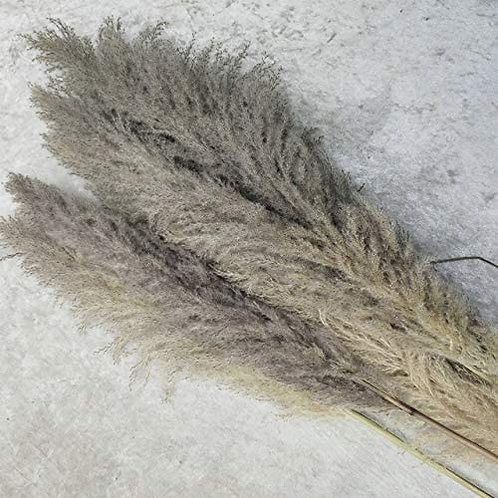 60 inch grey pampas grass