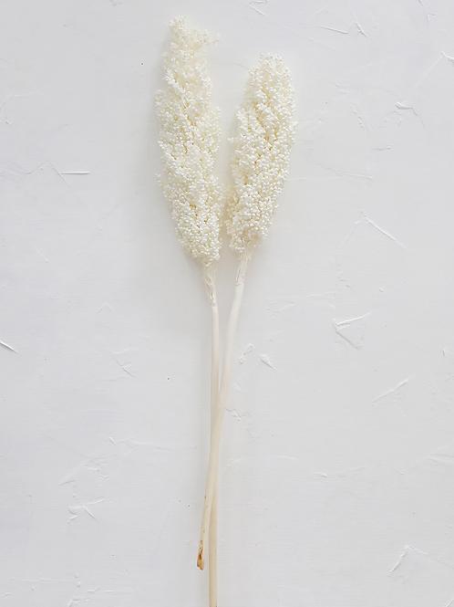 White preserved sorgam