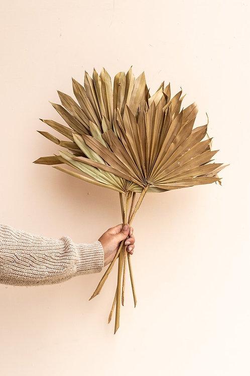 Natural sun palm