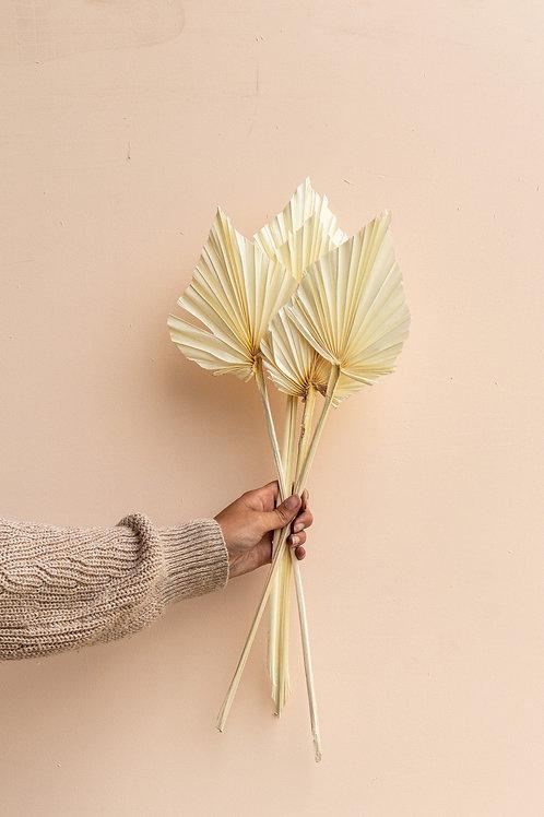 White palm spear