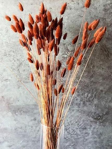 Orange bunny tails