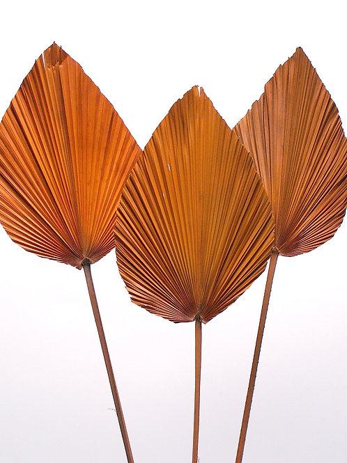 40 inch deep orange preserved palm leaf