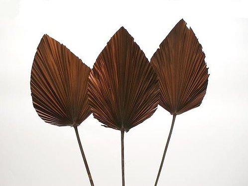 40 inch dark brown preserved palm leaf
