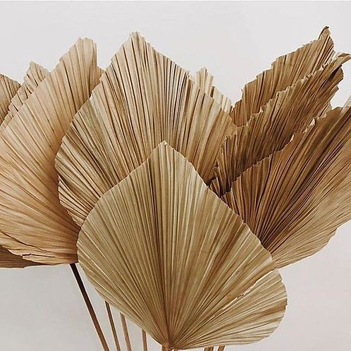 55 inch natural preserved palm leaf
