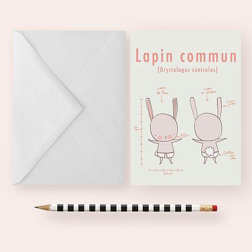 LAPIN COMMUN / Greeting Card