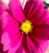 Flower Essence Combining.jpg
