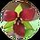 Thumbnail: Yin Yang – trillium combo
