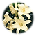 Madonna-Lily.png