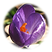 Purple_Crocus.png