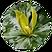 Green_Trillium.png