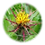 Blessed-Thistle--150x150.png