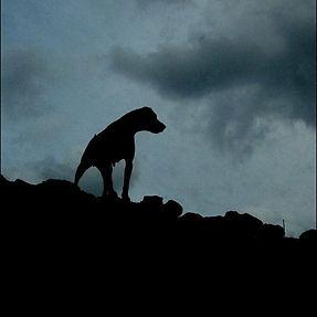 собака Баскервилей.jpg