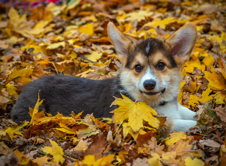 Debunking the Flea and Tick Myth