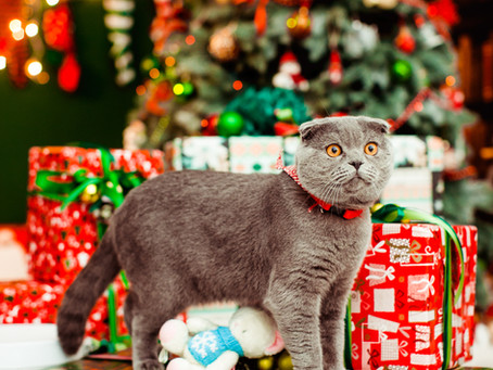 Do Pets Make Good Holiday Presents? 5 Things to Consider