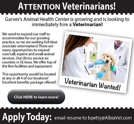 career, veterinarians, garvers, animal