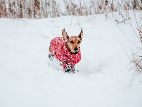 Protect Your Pet From Winter Weather