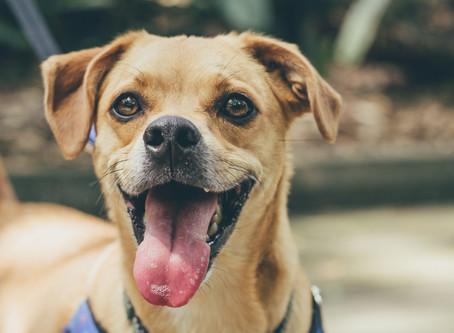 Do Dental Chews & Treats Really Help Clean Your Pet's Teeth?