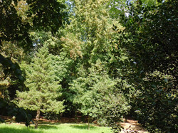 The romantic wood in the park