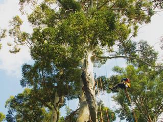 Corso di treeclimber a Villa Emo