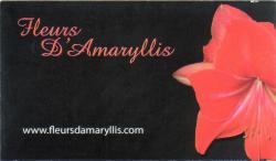 Fleurs d'Amaryllis,Chambly